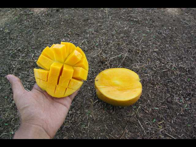 mangue2.jpg